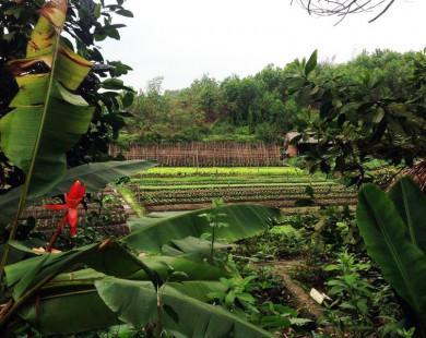 Ghé thăm khu du lịch sinh thái Thái Hải giữa rừng xanh Thái Nguyên