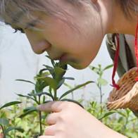 Nghệ thuật thưởng trà ướp mồ hôi trinh nữ ở Trung Quốc